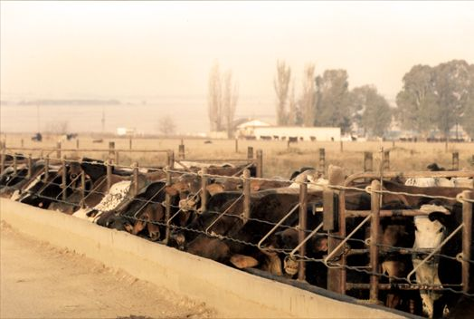 our story - feedlot